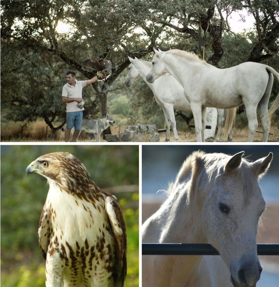 Animal friends. Protagonists of our rural houses in Cordoba