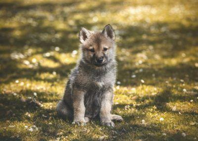 lobos en córdoba