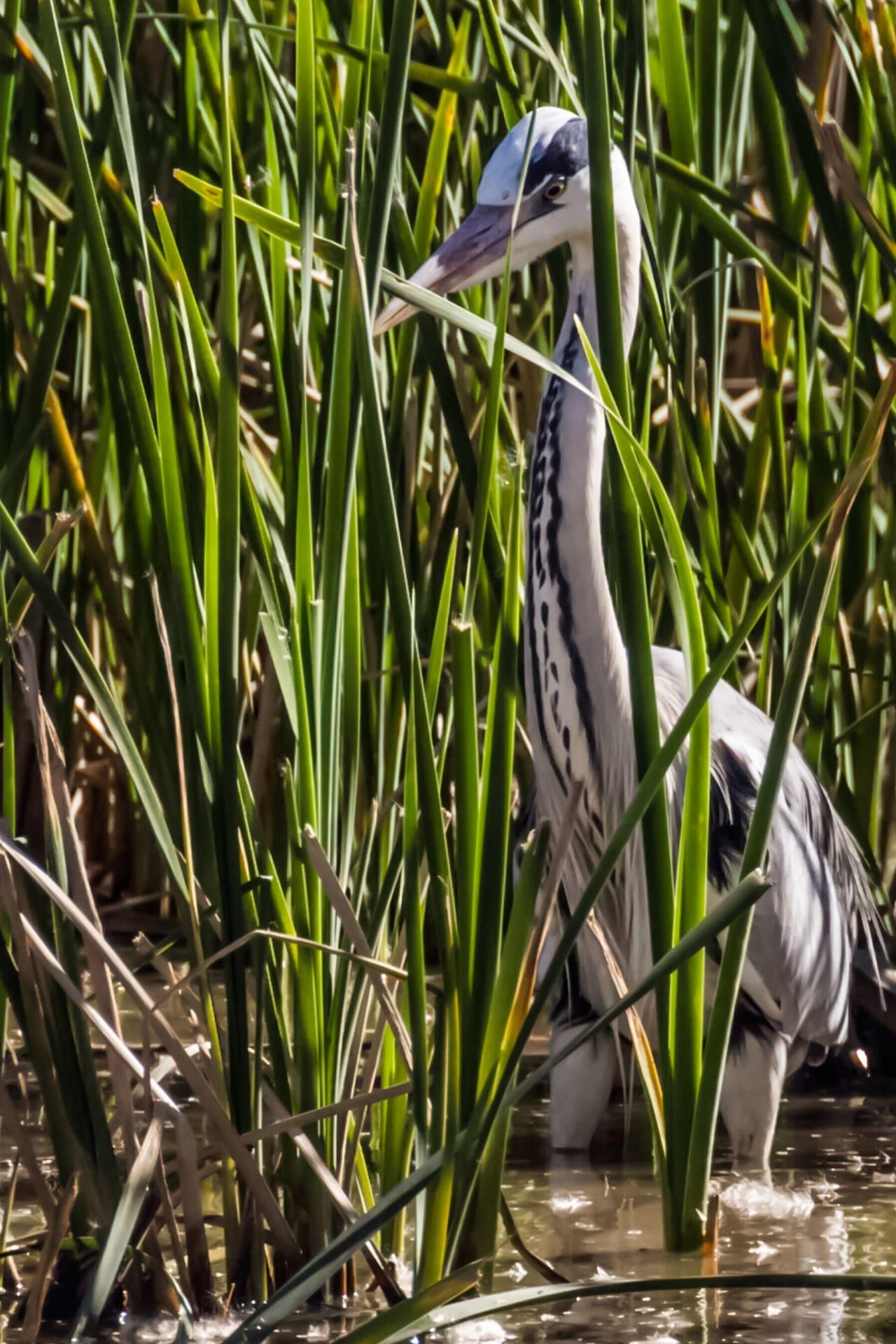 avistamiento aves acuáticas Andalucía
